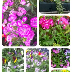 Floral display collage in Bargoed