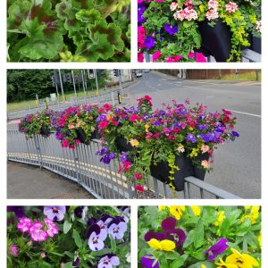 Floral Display collage 2020