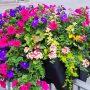 Floral Displays 2020