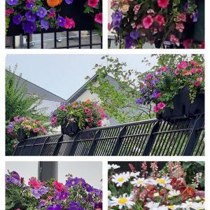Floral display on railings in Bargoed